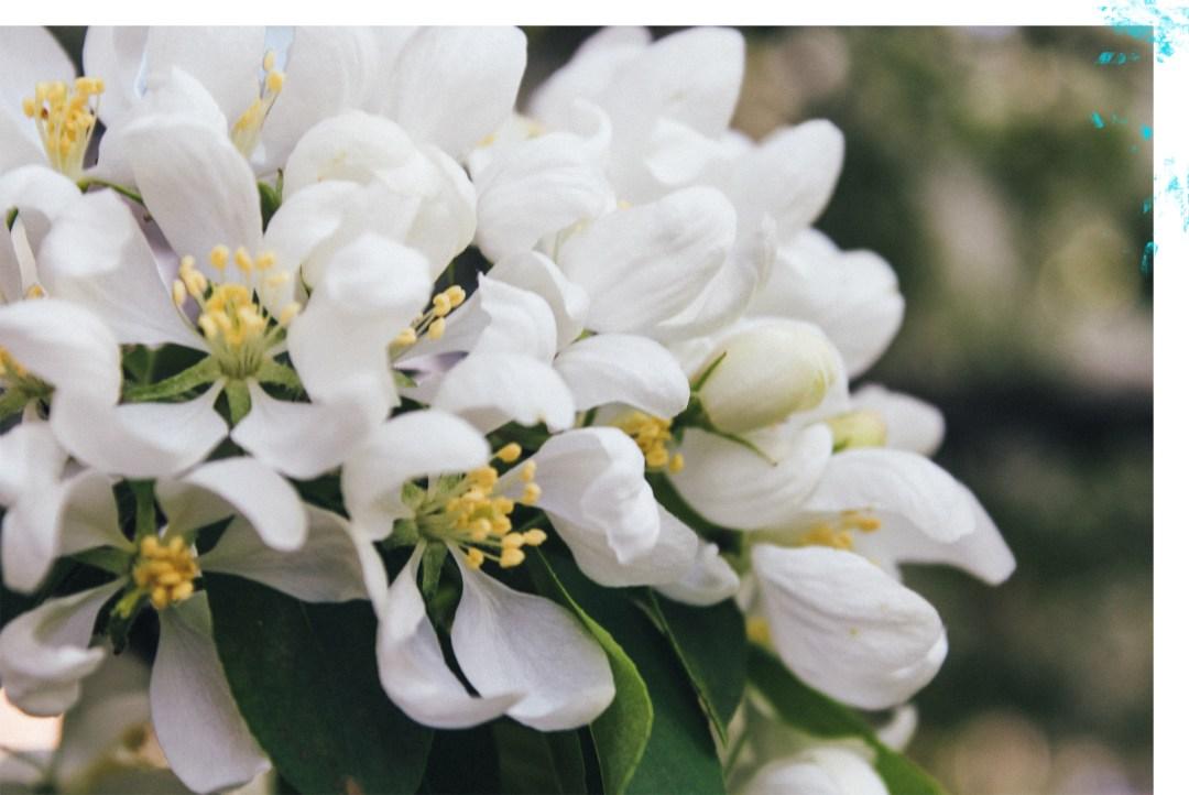 Mae Polzine Floral