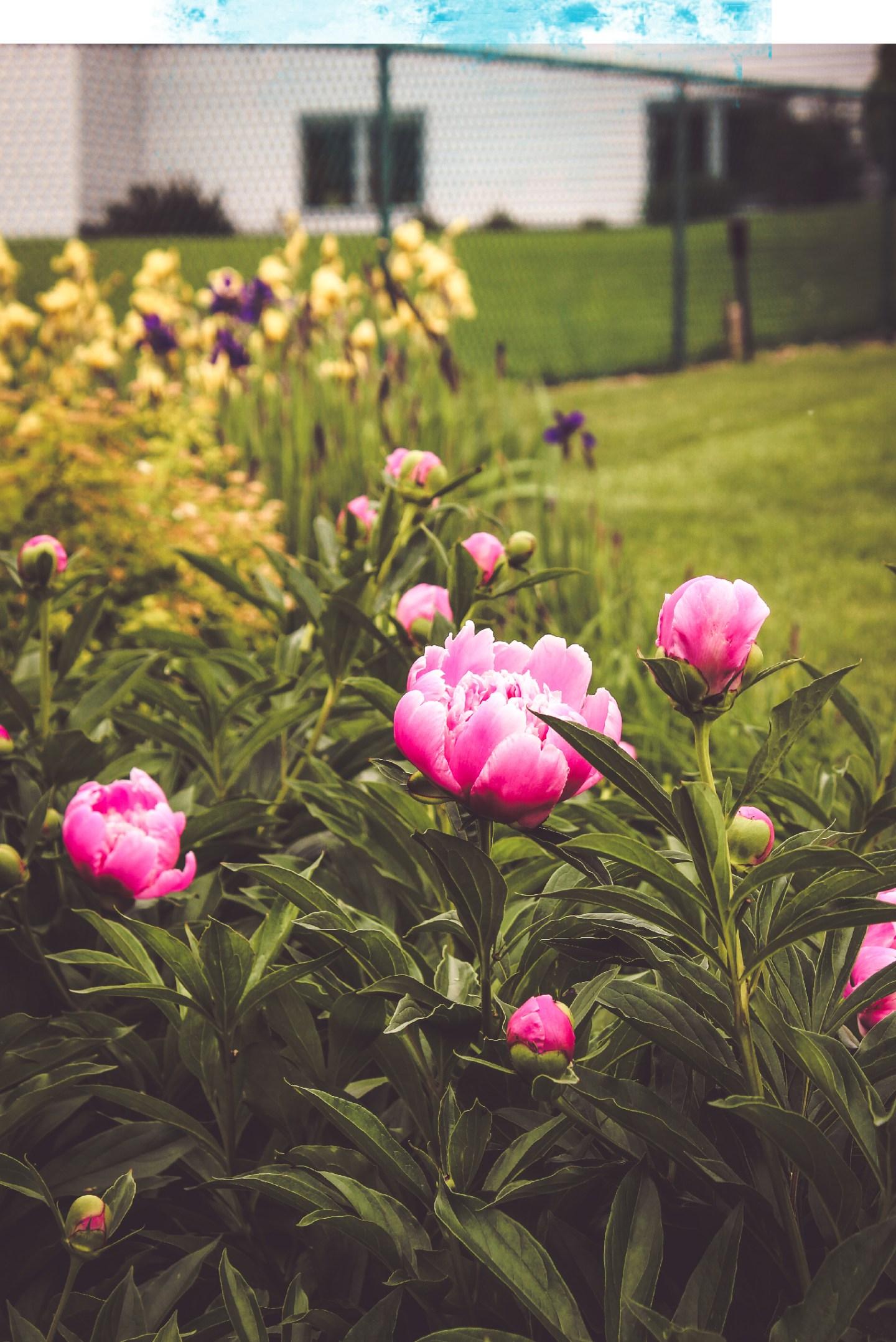 Mae Polzine Flowers
