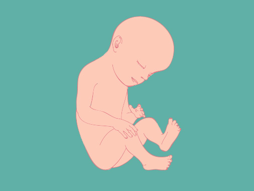 29 semanas de gestação