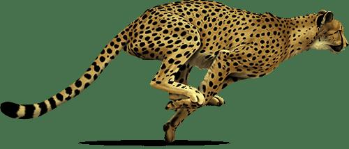 cheetah-png-17571-1
