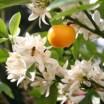 Märchen Die 3 Orangen