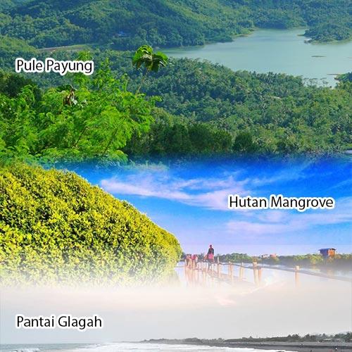 Trip Jogja 1D Pule Payung Hutan Mangrove Pantai Glagah