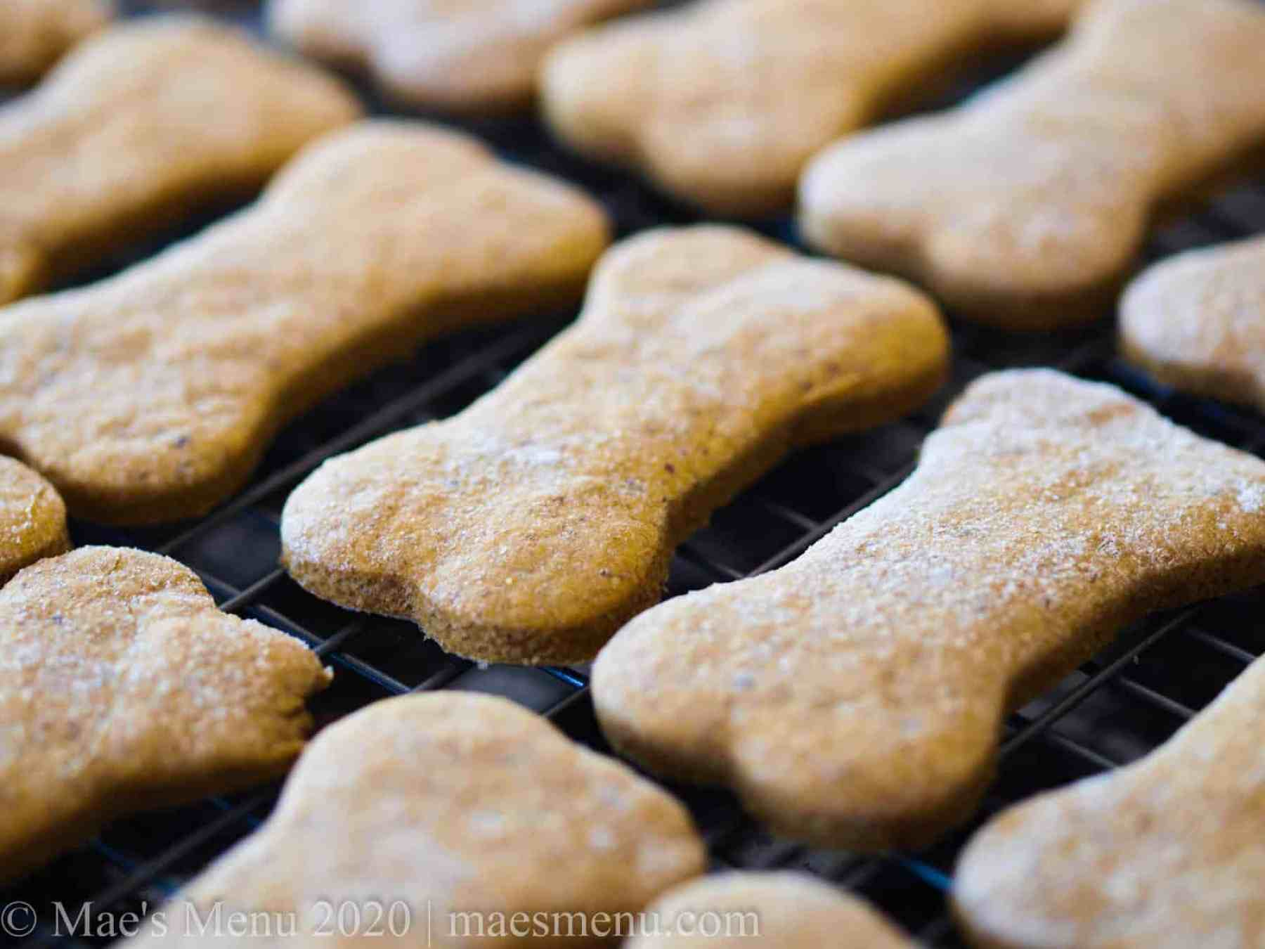 A tray of pumpkin dog treats cooling on a wire rack.