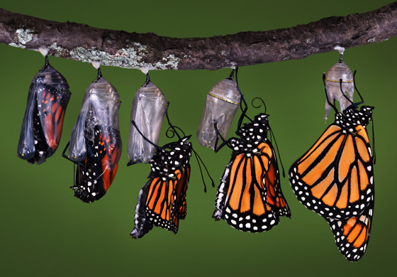 Data-Transformation-Butterfly-Image