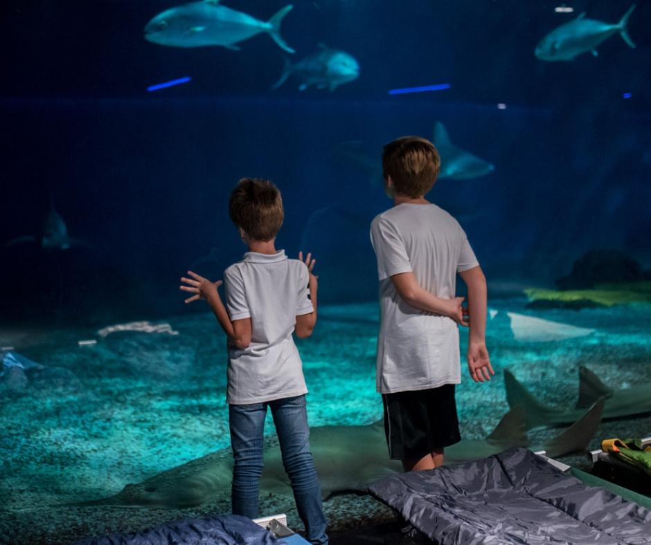 Notte con gli squali all'acquario di Genova: un'esperienza emozionante per bambini coraggiosi