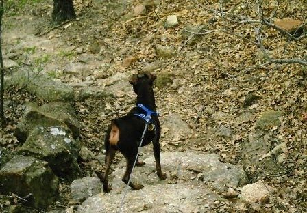 Confessions of a Grieving Dog Momma