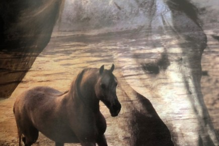 horses of the sun book 3928510653 1566147547870