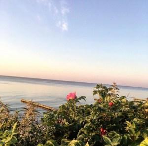 shipovnik na fone baltijskogo morya v zelenogradske