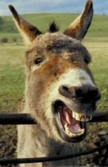 ils racontent tellement de caneries que je finirai par trouver l'âne soeur parmi eux..!