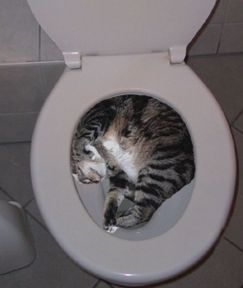 chat chasse WC