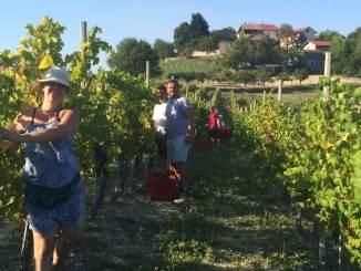 """Agosto, il mese della vendemmia! Coscia (Camera di Commercio): """"I mercati premiano la qualità crescente dei nostri vini"""" CorriereAl 1"""