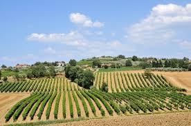 Domenica il 'grazie dei campi' a Casale Monferrato CorriereAl