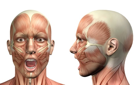 46518321 - 3d render of a medical figure showing mandible depression front and side view