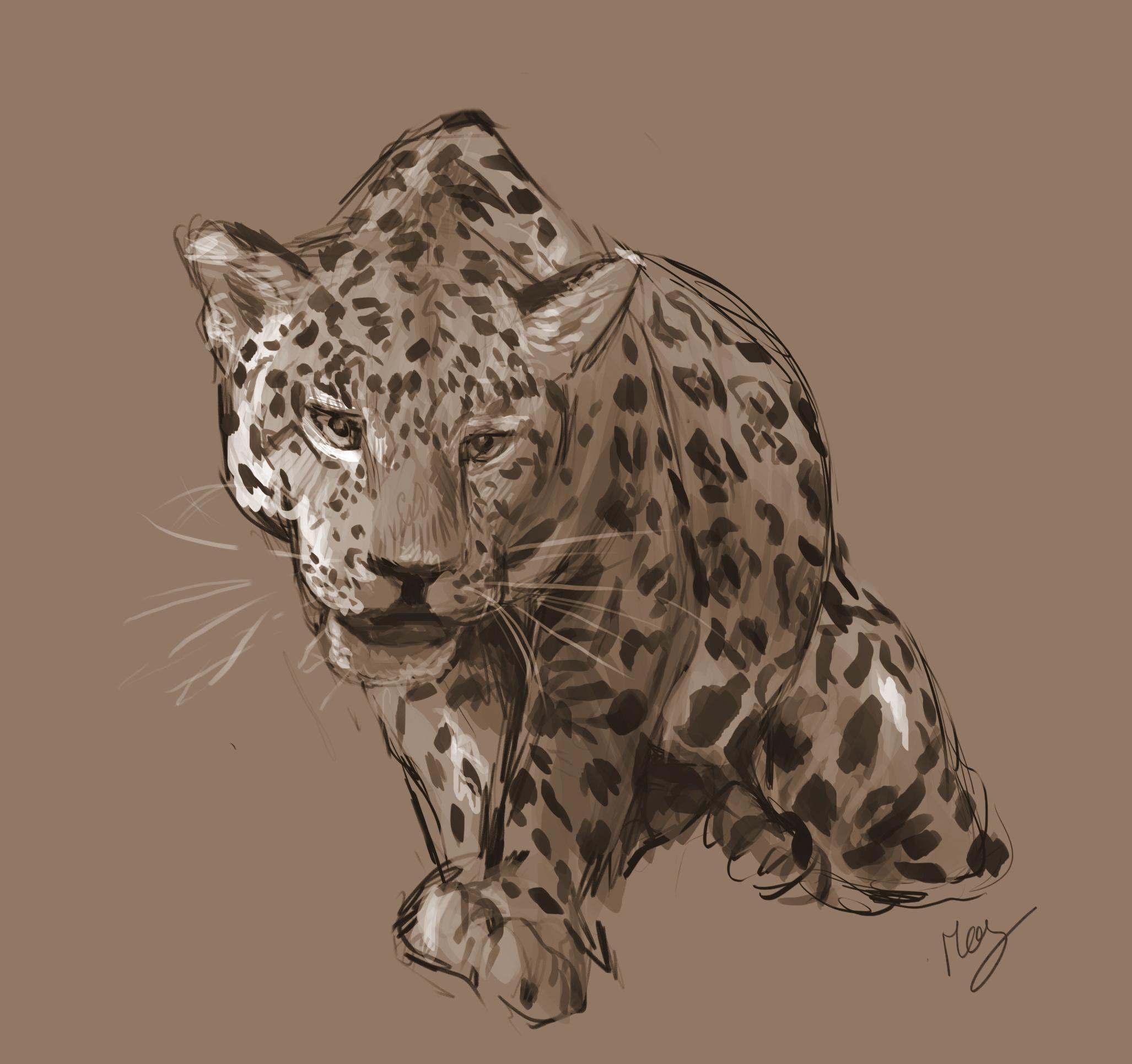 Jaguar study 1