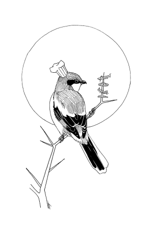 An Ink drawing of a Butcher Bird cooking a skewer of insects with a chef's hat on.