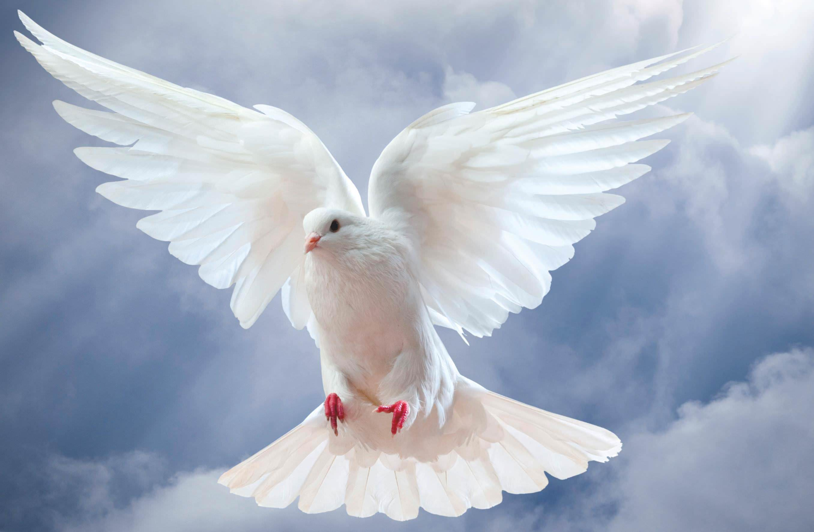You Are My Love You Are My Dove
