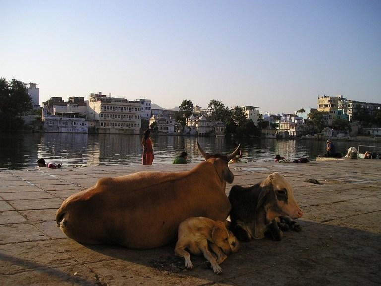 Hindoeïsme en vegetarisme