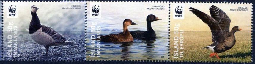 Námětová filatelie - Ohrožené druhy ptáků Islandu