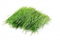 Weizengras - Magazin Freshbox