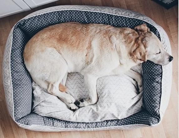 Makerist-Naehen-fuer-Hunde-17-tolle-Accessoires-fuer-Vierbeiner-Hundebett-mit-Reissverschluss