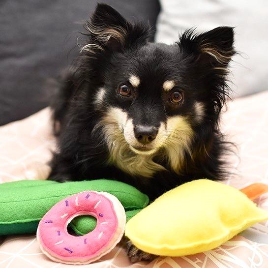 Makerist-Naehen-fuer-Hunde-17-tolle-Accessoires-fuer-Vierbeiner-Video-Hundespielzeug