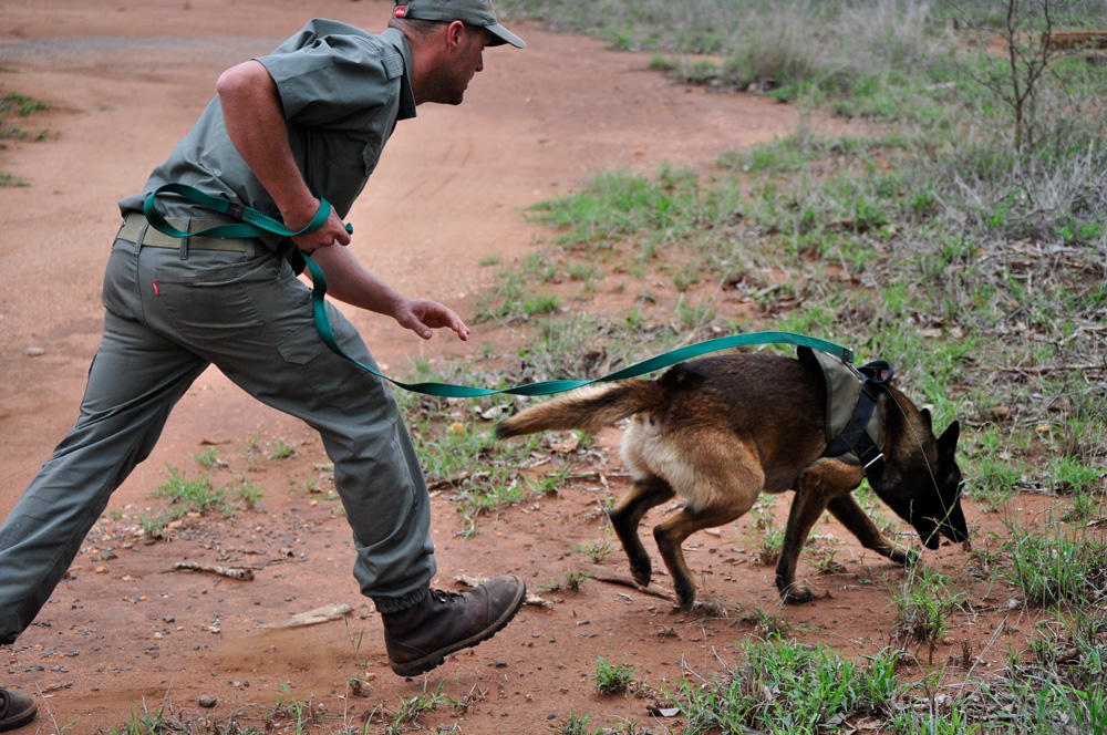 Antipoaching pooches  Africa Geographic Magazine