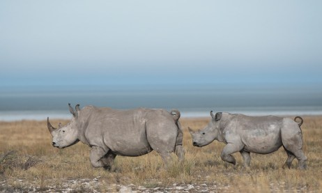 White-rhino-and-calf-against-the-backdrop-of-the--pan-©-Anja-Denker