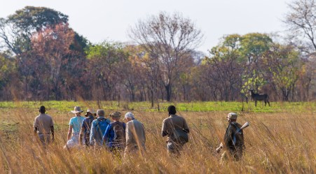 Guests on a walking safari in Kafue National Park, Zambia