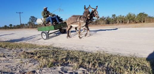 Donkeys are a popular form of transport © Simon Espley