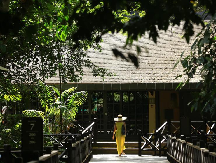mulu marriot, malaysian retreats, digital detox, borneo, ayus wellness, forest bathing, nature immersion