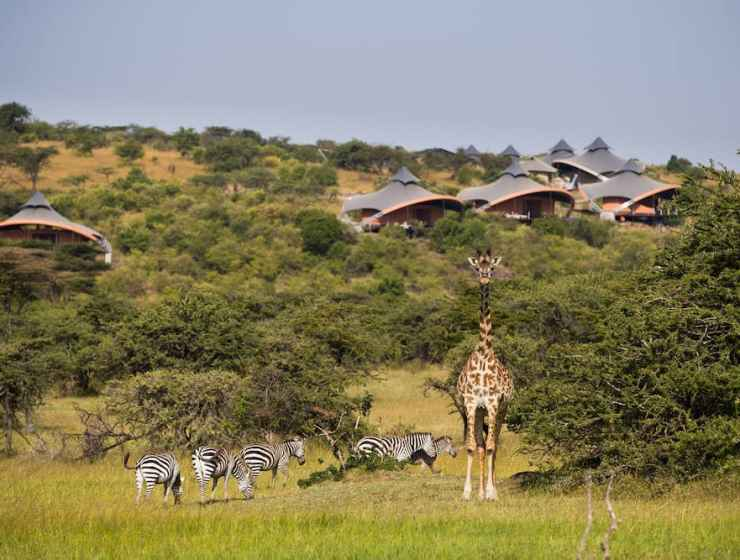luxury safari spa, lion king safari holiday