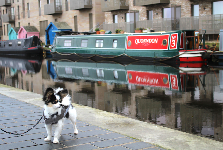 Rio on Union Canal
