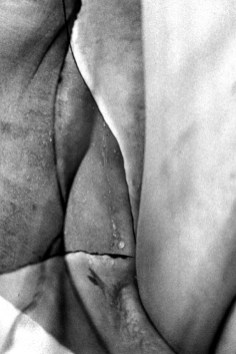 Agavi 07 - © Roberto Ciangola