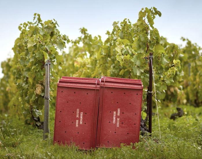 vigne-leclerc-briant