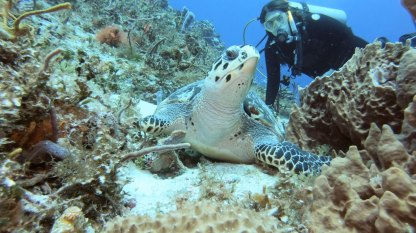 Hawksbill and Holt