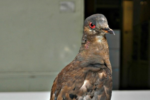 Can a Little Pigeon Teach Our World Something?