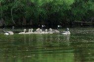 20150526-Bohigian-Conservation-Area-374