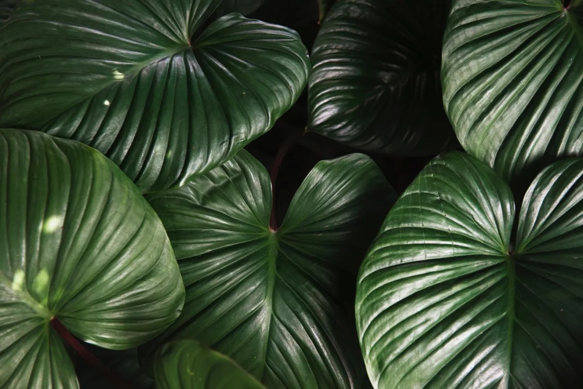 Tendenze arredo giardino 2018 - piante tropicali