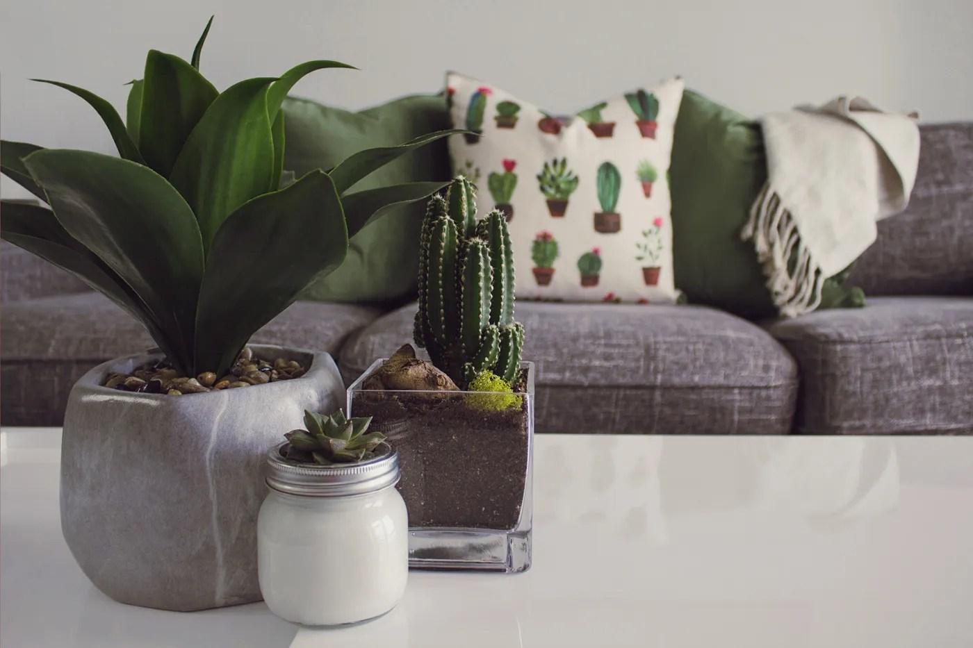 """Come Curare Le Piante come curare le piante per una casa """"sempreverde"""