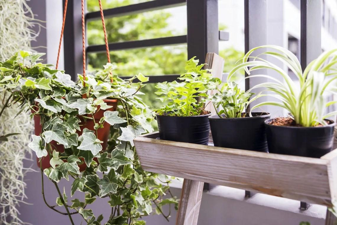 piante-d'appartamento_cambio-stagione