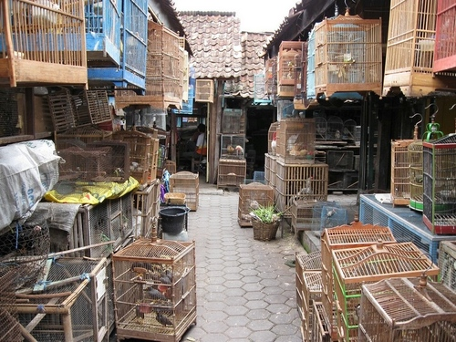 Bird Market in Indonesia, @Tripadvisor