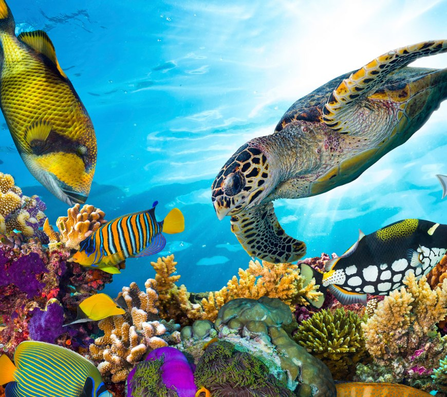 turtle on a coral reef