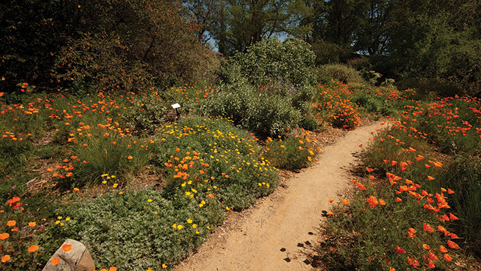 The Mary Wattis Brown Garden of California Native Plants at the UC Davis Arboretum