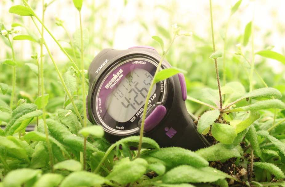 stop watch on ground laying on green plants