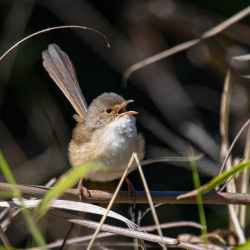 Small bird sings while standing on a branch