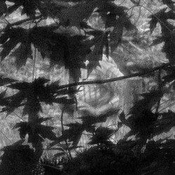 the shadows of leaves in black and white