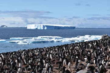 Paulet Island is the site of a large colony of Adelie penguins. Photo: Christina Devorshak '91
