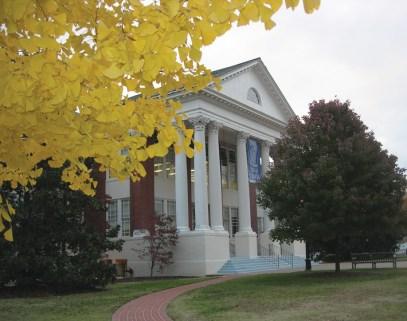 In fall, a ginkgo spins gold near Monroe Hall. (Photo by Lynda Richardson '81)
