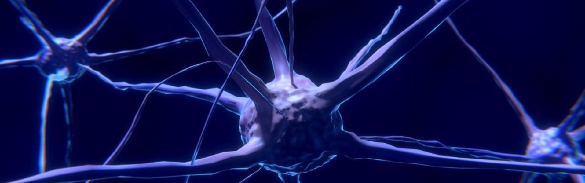 L'immagine mostra vari neuroni