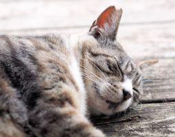 ぐっすり眠るためにできる3つのポイント!早寝早起きが社会を変える?